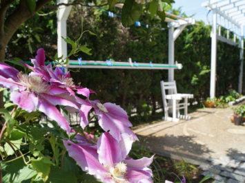 横須賀・葉山・逗子・鎌倉・湘南・川崎・横浜の庭づくりをしている彩葉苑がつくった葉山町O様邸の植栽工事と造園外構工事の写真です。ぶどう棚の写真です。