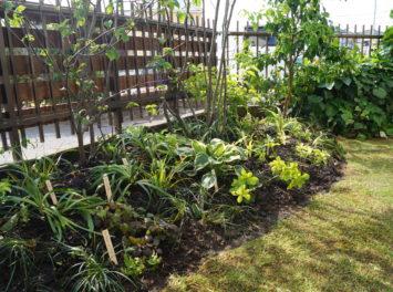 茅ヶ崎市N様邸の植栽工事と造園外構工事の写真です。既存アルミフェンスをウッドフェンスにした写真です。