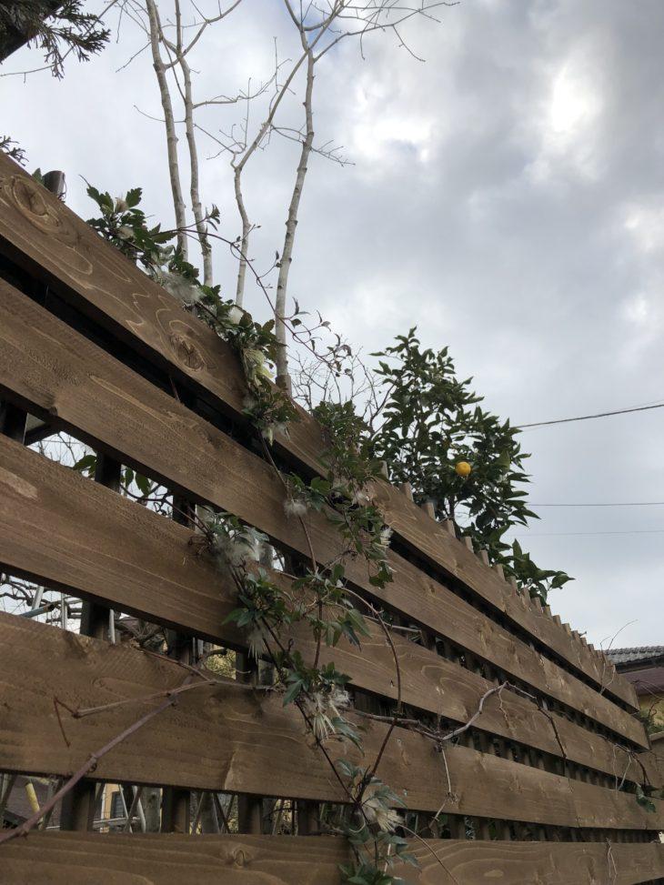 彩葉苑が2016年に庭づくりした茅ヶ崎市のお庭のお手入れをした時のクレマチスとウッドフェンスの写真です。