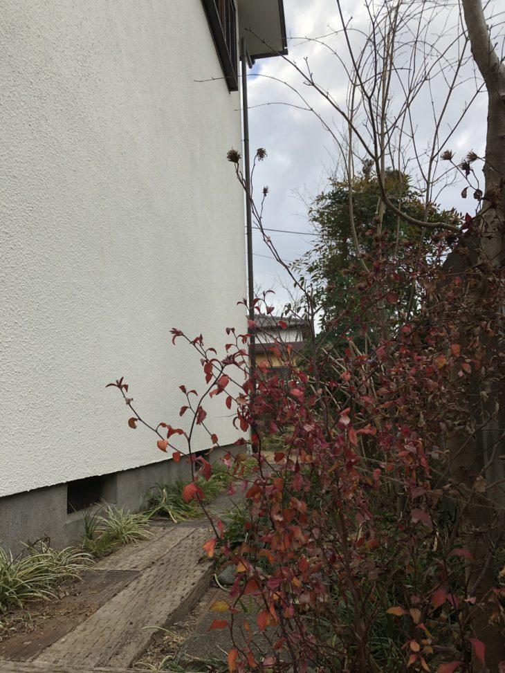 彩葉苑が2016年に庭づくりした茅ヶ崎市のお庭のお手入れをした時のアプローチの写真です。