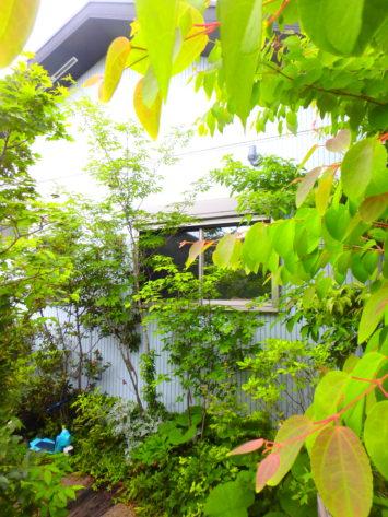 横浜市K様邸、成長したのん気な雰囲気の雑木の庭