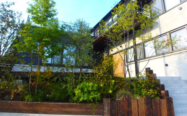 横須賀市のいろは苑が葉山町に作った森のようなモダンガーデン